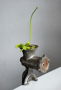 Plant Engine_03
